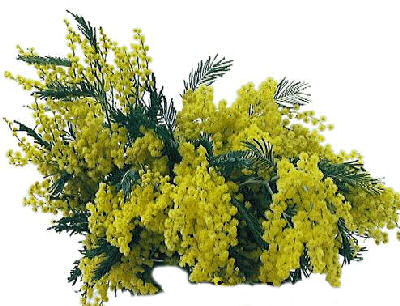 mimose[1]