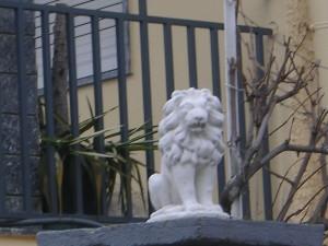 non è il leone dell'anno scorso!